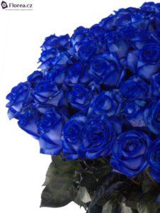 100 růží - modré růže