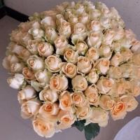 100 krásných růží