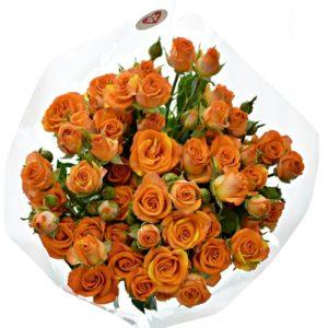 Kytice 7 trsových oranžových růží SMASHING 50cm