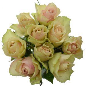 Kytice 9 krémovozelených růží LA BELLE 40cm