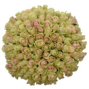Kytice 100 růží LA BELLE 40cm