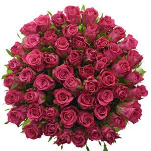 Kytice 55 vínových růží ORCHESTRA 60cm