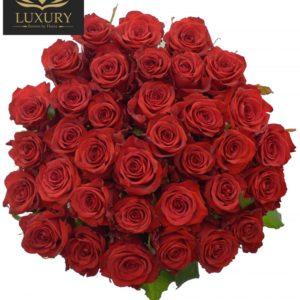 Kytice 35 luxusních růží RED EAGLE 70cm